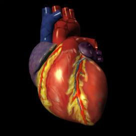 heart72-saidaonline