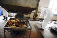 علماء يحذرون من احتمال عودة فيروس اتش7ان9 في الخريف