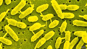 130702112939_bacteria_extremofila_304x171_spl