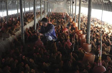 الصين تعلن أول حالة اصابة جديدة بانفلونزا الطيور منذ اغسطس