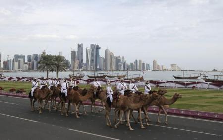 علماء يثبتون اصابة الفيروس التاجي لإبل في قطر