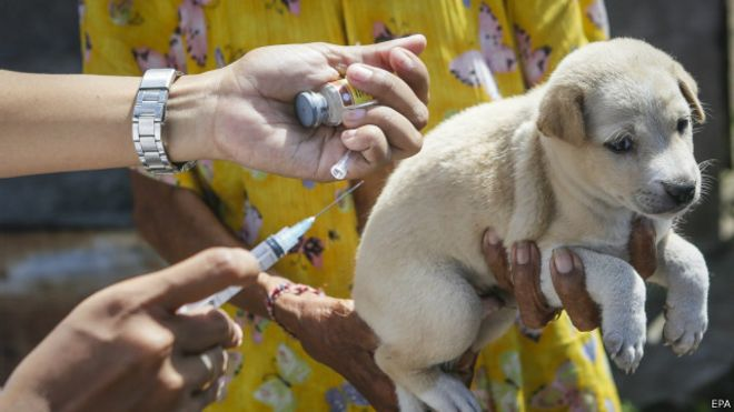 150417130717_rabies_dogs_vaccination_640x360_epa