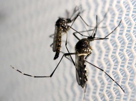 لماذا يتسبب فيروس زيكا في دق ناقوس الخطر؟