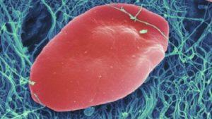 160408222909_platelets_640x360_spl_nocredit